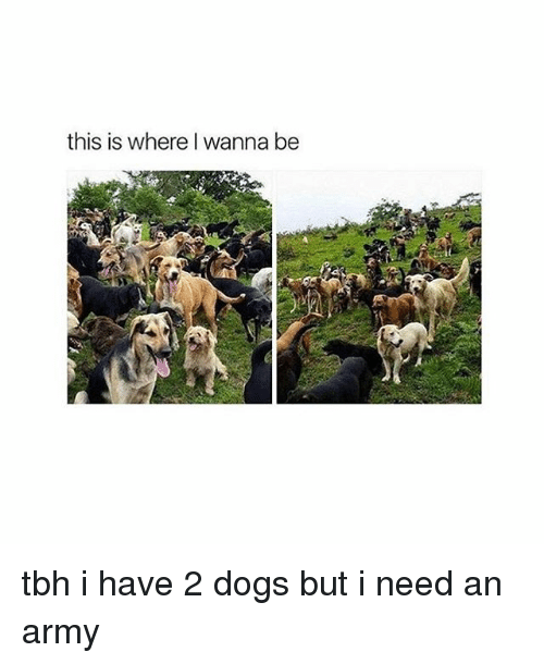 Dogs, Tbh, and Tumblr: this is where wanna be tbh i have 2 dogs but i need an army