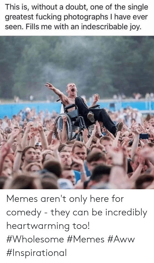 Wholesome Memes: This is, without a doubt, one of the single  greatest fucking photographs I have ever  seen. Fills me with an indescribable joy. Memes aren't only here for comedy - they can be incredibly heartwarming too! #Wholesome #Memes #Aww #Inspirational