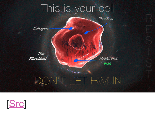 "Reddit, Com, and Acid: This is your cel  Collagen  SI  The  Fibroblast  Hyaluronic  Acid  DONT LET HIM IN <p>[<a href=""https://www.reddit.com/r/surrealmemes/comments/8bkf7u/this_is_your_last_refuge/"">Src</a>]</p>"