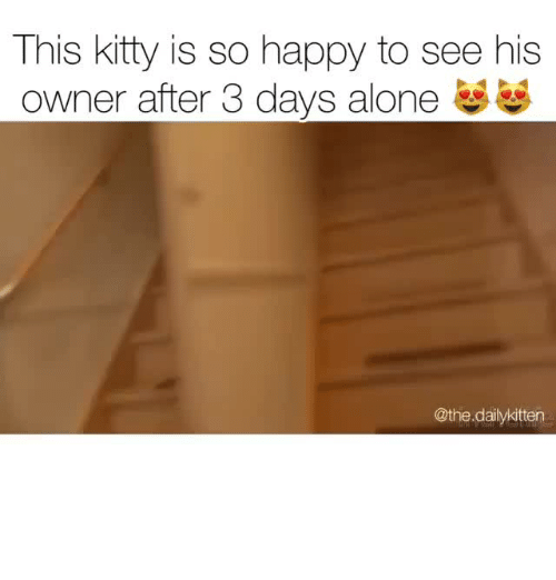 Being Alone, Happy, and Kitty: This kitty is so happy to see his  owner after 3 days alone  @the dailykitten
