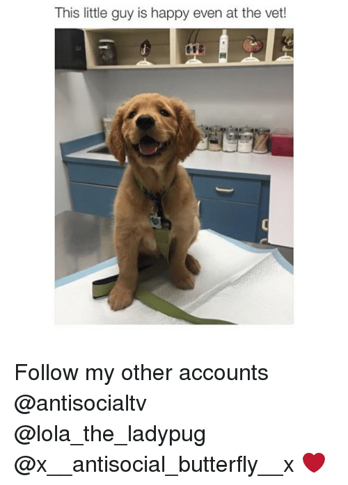 Vetted: This little guy is happy even at the vet! Follow my other accounts @antisocialtv @lola_the_ladypug @x__antisocial_butterfly__x ❤️