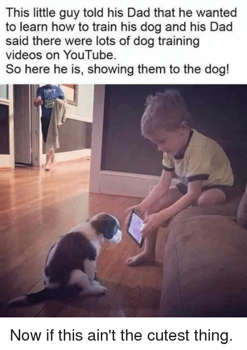 Dad, Dank, and Videos: This little guy told his Dad that he wanted  to learn how to train his dog and his Dad  said there were lots of dog training  videos on You Tube  So here he is, showing them to the dog! Now if this ain't the cutest thing.