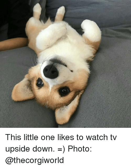 This Little One Likes To Watch Tv Upside Down Photo Meme On