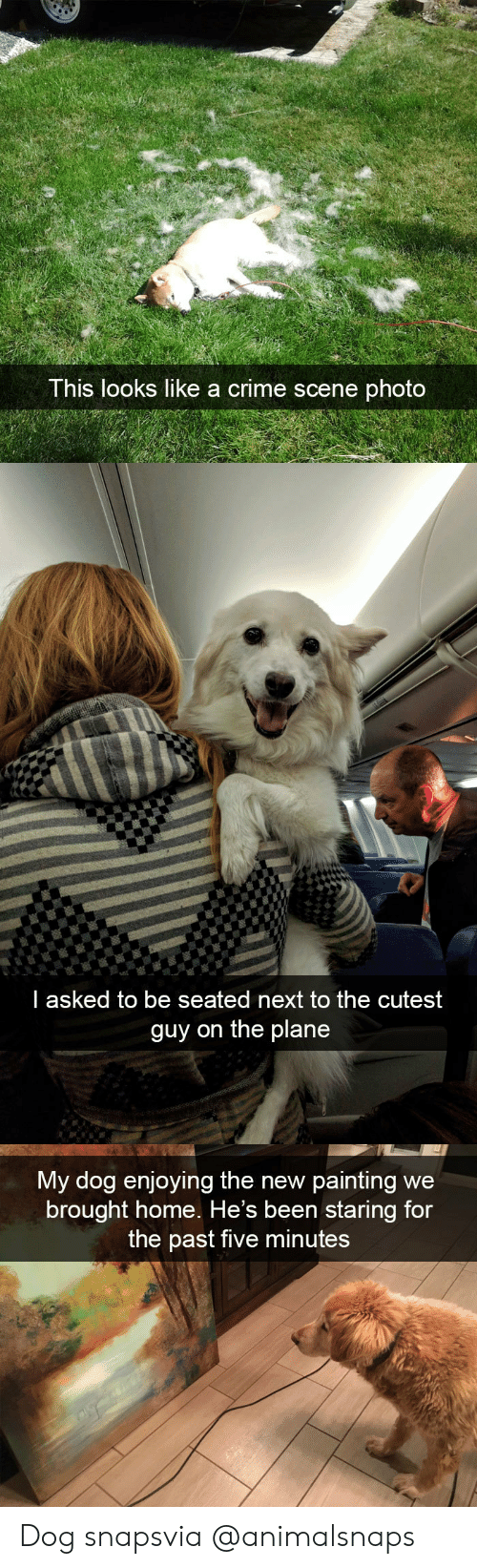 Crime, Target, and Tumblr: This looks like a crime scene photo   l asked to be seated next to the cutest  guy on the plane   My dog enjoying the new painting  we  brought home. He's been staring for  the past five minutes Dog snapsvia @animalsnaps