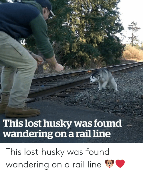Husky: This lost husky was found  wandering on a rail line This lost husky was found wandering on a rail line 🐶❤️