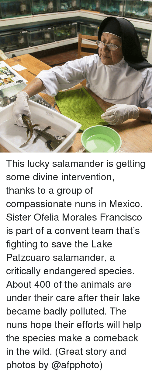 Animals, Memes, and Help: This lucky salamander is getting some divine intervention, thanks to a group of compassionate nuns in Mexico. Sister Ofelia Morales Francisco is part of a convent team that's fighting to save the Lake Patzcuaro salamander, a critically endangered species. About 400 of the animals are under their care after their lake became badly polluted. The nuns hope their efforts will help the species make a comeback in the wild. (Great story and photos by @afpphoto)