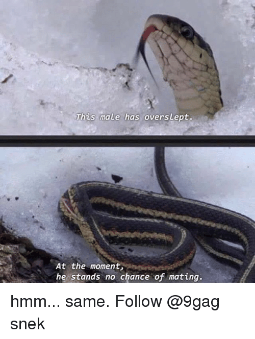 9gag, Memes, and 🤖: This male has oversLept.  At the moment,  he stands no chance of mating. hmm... same. Follow @9gag snek