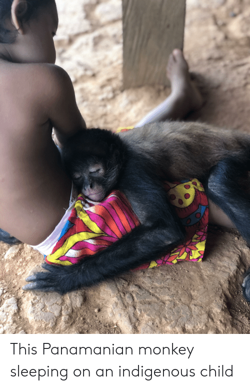 Monkey, Sleeping, and Child: This Panamanian monkey sleeping on an indigenous child