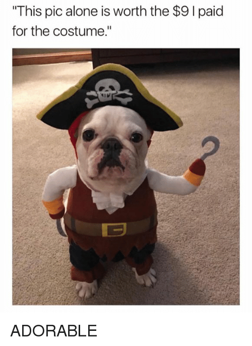 """Being Alone, Dank, and Adorable: This pic alone is worth the $91paid  for the costume.""""  曰 ADORABLE"""