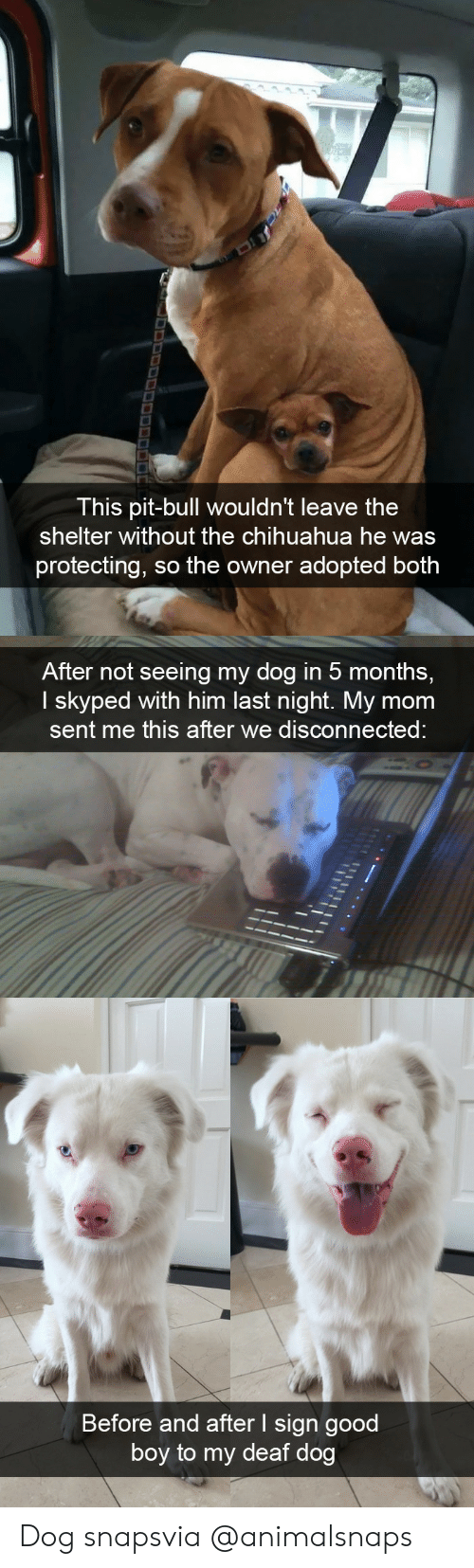 disconnected: This pit-bull wouldn't leave the  shelter without the chihuahua he was  protecting, so the owner adopted both   After not seeing my dog in 5 months,  I skyped with him last night. My mom  sent me this after we disconnected   Before and after I sign good  boy to my deaf dog Dog snapsvia @animalsnaps