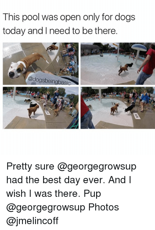 Dogs, Memes, and Best: This pool was open only for dogs  today and I need to be there.  @dogsbeingbas Pretty sure @georgegrowsup had the best day ever. And I wish I was there. Pup @georgegrowsup Photos @jmelincoff
