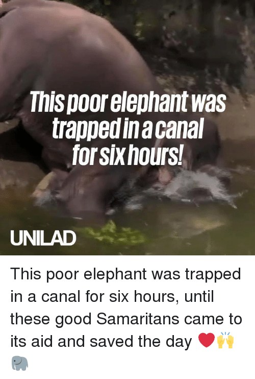 Dank, Elephant, and Good: This poor elephant was  trappedinacanal  forsixhours  UNILAD This poor elephant was trapped in a canal for six hours, until these good Samaritans came to its aid and saved the day ❤️️🙌🐘