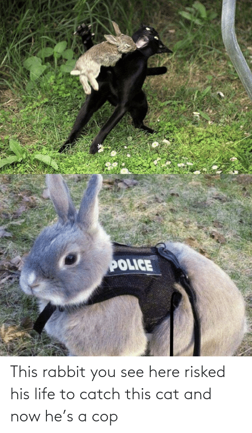 see: This rabbit you see here risked his life to catch this cat and now he's a cop