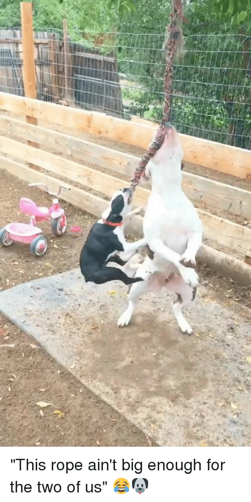 """Big, Rope, and For: """"This rope ain't big enough for the two of us"""" 😂🐶"""