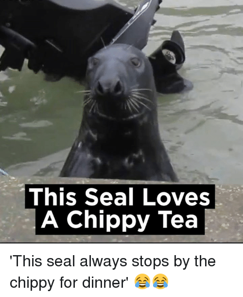 Dank, Love, and Seal: This Seal Loves  A Chippy Tea 'This seal always stops by the chippy for dinner' 😂😂