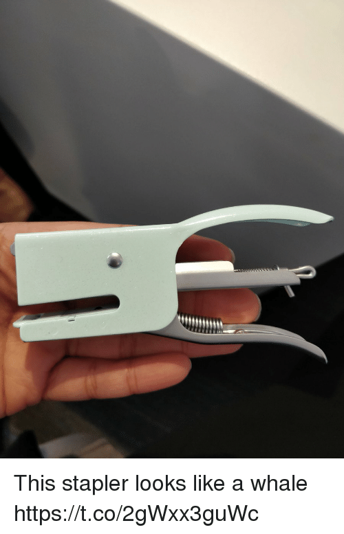 Faces-In-Things, Whale, and This: This stapler looks like a whale https://t.co/2gWxx3guWc