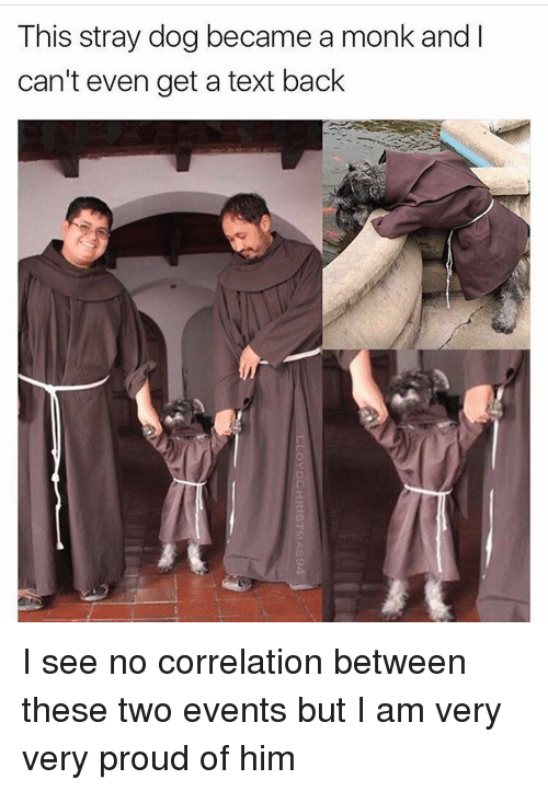 Memes, Text Back, and 🤖: This stray dog became a monk and l  can't even get a text back I see no correlation between these two events but I am very very proud of him