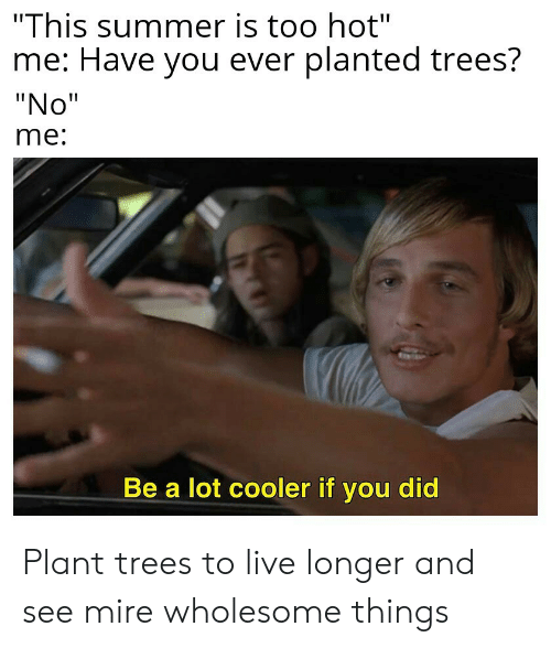 """Summer, Live, and Trees: """"This summer is too hot""""  me: Have you ever planted trees?  """"No""""  me:  Be a lot cooler if you did Plant trees to live longer and see mire wholesome things"""
