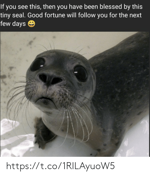 Blessed, Memes, and Good: this, then you have been blessed by this  tiny seal. Good fortune will follow you for the next  few days https://t.co/1RILAyuoW5