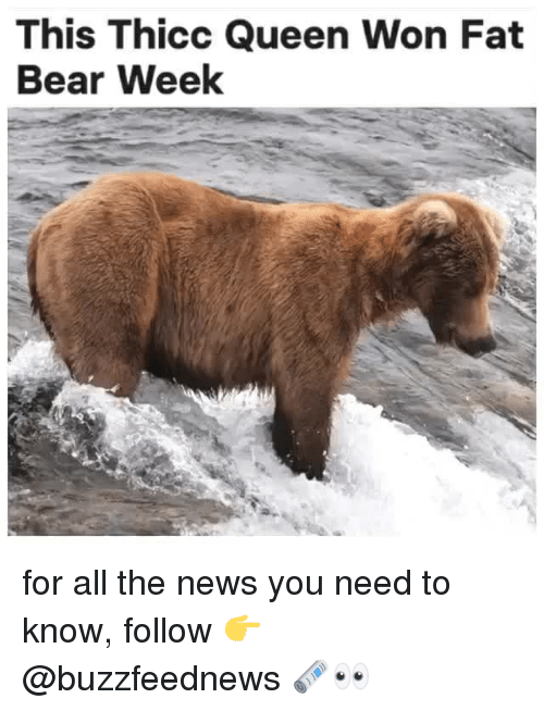 News, Queen, and Bear: This Thicc Queen Won Fat  Bear Week for all the news you need to know, follow 👉 @buzzfeednews 🗞👀