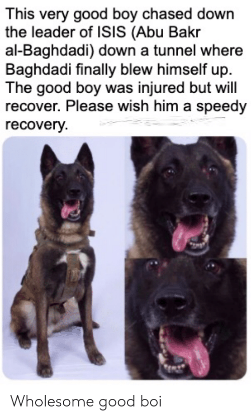 recovery: This very good boy chased down  the leader of ISIS (Abu Bakr  al-Baghdadi) down a tunnel where  Baghdadi finally blew himself up  The good boy was injured but will  recover. Please wish him a speedy  recovery Wholesome good boi