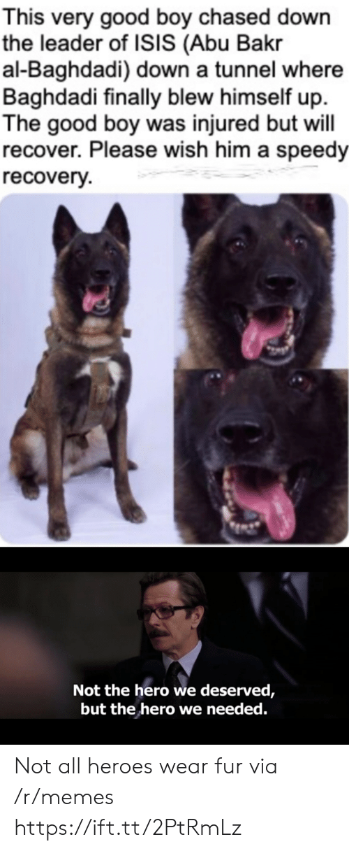 good boy: This very good boy chased down  the leader of ISIS (Abu Bakr  al-Baghdadi) down a tunnel where  Baghdadi finally blew himself up  The good boy was injured but will  recover. Please wish him a speedy  recovery  Not the hero we deserved,  but the hero we needed. Not all heroes wear fur via /r/memes https://ift.tt/2PtRmLz