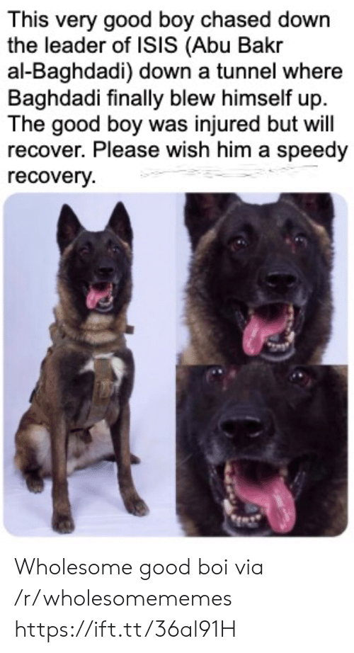 recovery: This very good boy chased down  the leader of ISIS (Abu Bakr  al-Baghdadi) down a tunnel where  Baghdadi finally blew himself up  The good boy was injured but will  recover. Please wish him a speedy  recovery Wholesome good boi via /r/wholesomememes https://ift.tt/36al91H