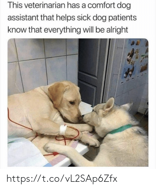 Memes, Veterinarian, and Sick: This veterinarian has a comfort dog  assistant that helps sick dog patients  know that everything will be alright https://t.co/vL2SAp6Zfx