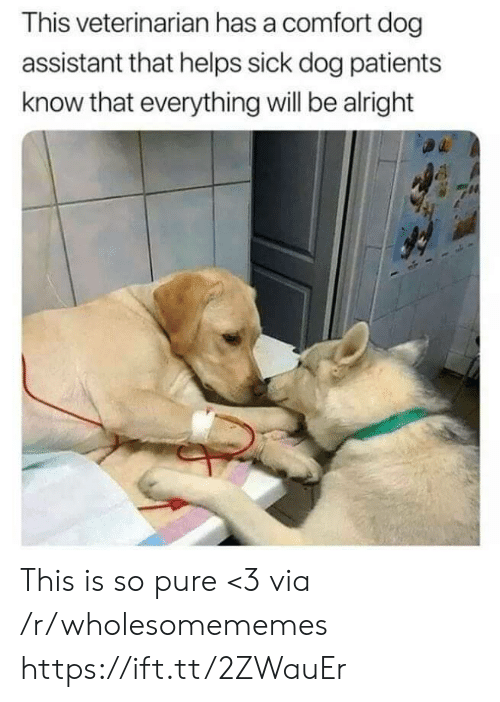 Veterinarian, Sick, and Helps: This veterinarian has a comfort dog  assistant that helps sick dog patients  know that everything will be alright This is so pure <3 via /r/wholesomememes https://ift.tt/2ZWauEr