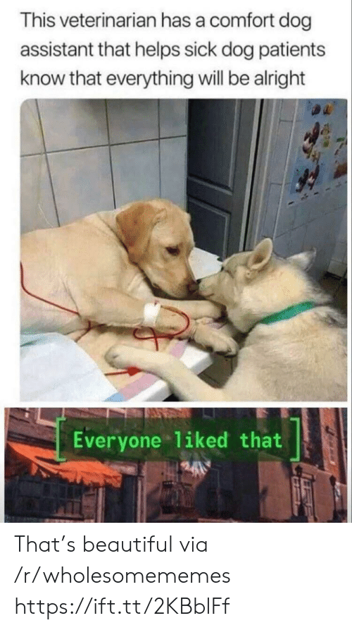 Beautiful, Veterinarian, and Sick: This veterinarian has a comfort dog  assistant that helps sick dog patients  know that everything will be alright  Everyone liked that That's beautiful via /r/wholesomememes https://ift.tt/2KBblFf
