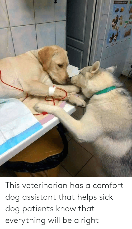 Patients: This veterinarian has a comfort dog assistant that helps sick dog patients know that everything will be alright