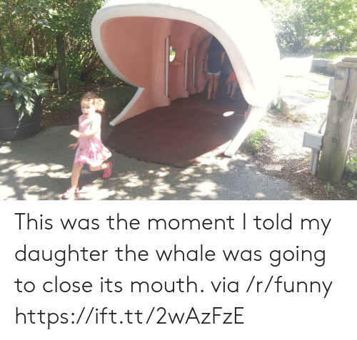 Funny, Whale, and Daughter: This was the moment I told my daughter the whale was going to close its mouth. via /r/funny https://ift.tt/2wAzFzE