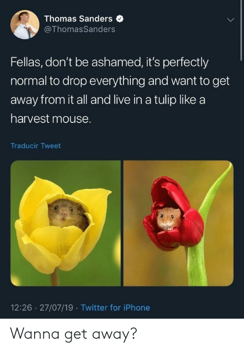 Iphone, Twitter, and Live: Thomas Sanders  @ThomasSanders  Fellas, don't be ashamed, it's perfectly  normal to drop everything and want to get  away from it all and live in a tulip like a  harvest mouse.  Traducir Tweet  12:26 27/07/19 Twitter for iPhone Wanna get away?