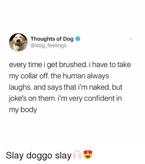 Funny, Jokes, and Naked: Thoughts of Dog  @dog_feelings  every time i get brushed. i have to take  my collar off. the human always  laughs. and says that i'm naked. but  joke's on them. i'm very confident in  my body Slay doggo slay🙌🏻😍