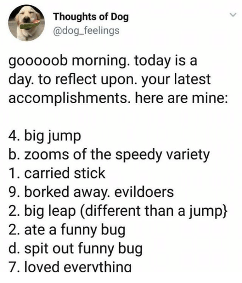 Funny, Today, and Dog: Thoughts of Dog  @dog_feelings  gooooob morning. today is a  day. to reflect upon. your latest  accomplishments. here are mine:  4. big jump  b. zooms of the speedy variety  1. carried stick  9. borked away. evildoers  2. big leap (different than a jump)  2. ate a funny bug  d. spit out funny bug  7, loved evervthing