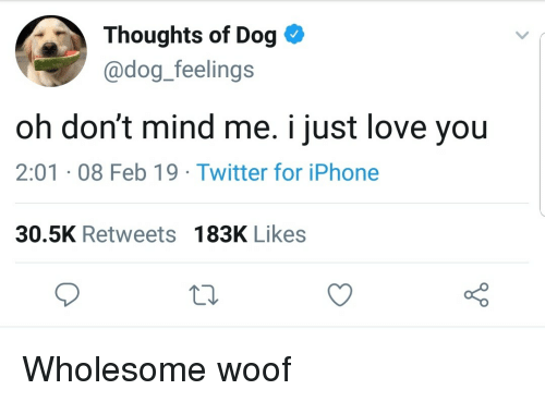 Iphone, Love, and Twitter: Thoughts of Dog *  @dog_feelings  oh don't mind me. i just love you  2:01 08 Feb 19 - Twitter for iPhone  30.5K Retweets 183K Likes Wholesome woof