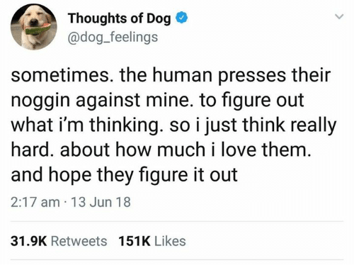 Love, Figure It Out, and Hope: Thoughts of Dog  @dog_feelings  sometimes. the human presses their  noggin against mine. to figure out  what i'm thinking. so i just think really  hard. about how much i love them.  and hope they figure it out  2:17 am 13 Jun 18  31.9K Retweets  151K Likes