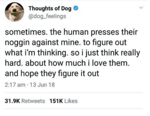 Dank, Love, and Figure It Out: Thoughts of Dog  @dog_feelings  sometimes. the human presses their  noggin against mine. to figure out  what i'm thinking. so i just think really  hard. about how much i love them  and hope they figure it out  2:17 am 13 Jun 18  31.9K Retweets 151K Likes