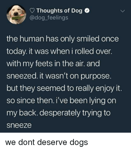 Dogs, Today, and Lying: Thoughts of Dog  @dog_feelings  the human has only smiled once  today. it was when i rolled over.  with my feets in the air. and  sneezed. it wasn't on purpose  but they seemed to really enjoy it.  so since then. i've been lying on  my back. desperately trying to  sneeze we dont deserve dogs