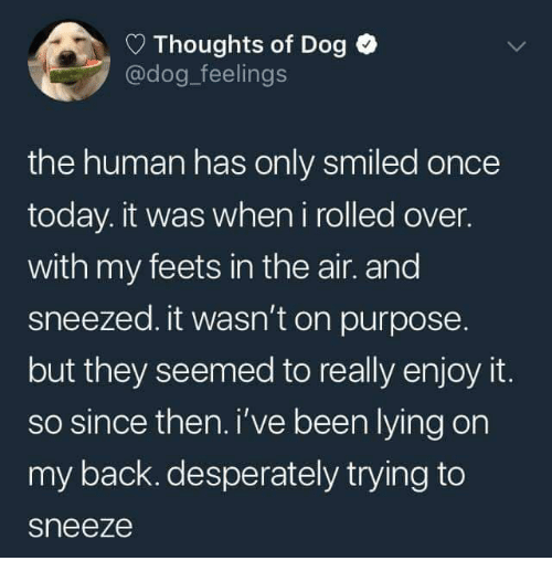 Dank, Today, and Lying: Thoughts of Dog  @dog_feelings  the human has only smiled once  today. it was when i rolled over.  with my feets in the air. and  sneezed. it wasn't on purpose  but they seemed to really enjoy it.  so since then. i've been lying on  my back. desperately trying to  sneeze