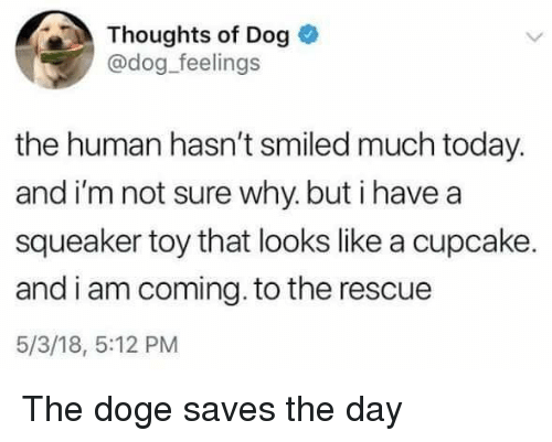 Doge, Today, and Dog: Thoughts of Dog  @dog_feelings  the human hasn't smiled much today.  and i'm not sure why. but i have a  squeaker toy that looks like a cupcake.  and i am coming. to the rescue  5/3/18, 5:12 PM