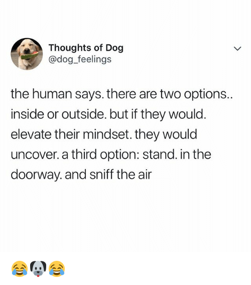 Relatable, Dog, and Human: Thoughts of Dog  @dog_feelings  the human says. there are two options..  inside or outside. but if they would.  elevate their mindset, they would  uncover. a third option: stand. in the  doorway. and sniff the air 😂🐶😂