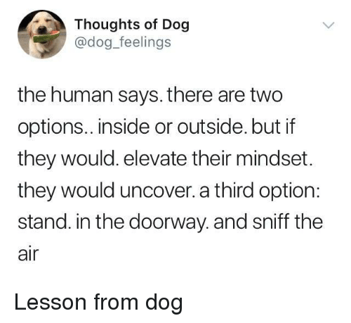 elevate: Thoughts of Dog  @dog_feelings  the human says. there are two  options.. inside or outside. but if  they would. elevate their mindset.  they would uncover. a third option:  stand. in the doorway. and sniff the  air <p>Lesson from dog</p>