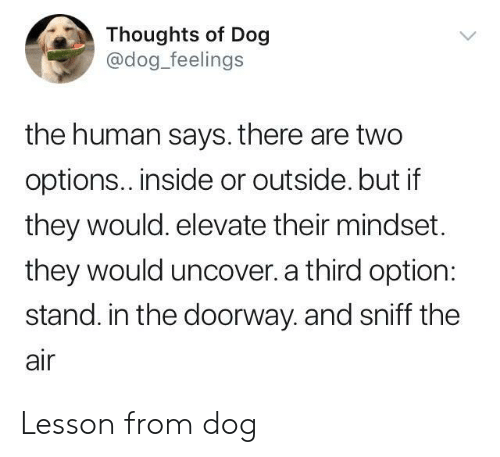 elevate: Thoughts of Dog  @dog_feelings  the human says. there are two  options.. inside or outside. but if  they would. elevate their mindset.  they would uncover. a third option:  stand. in the doorway. and sniff the  air Lesson from dog