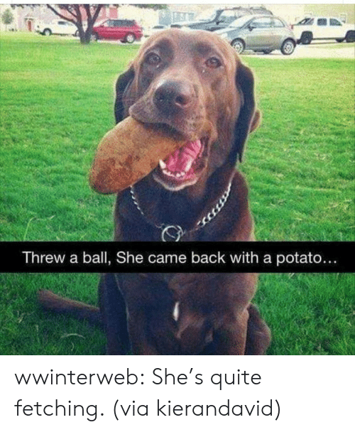 Reddit, Target, and Tumblr: Threw a ball, She came back with a potato... wwinterweb:  She's quite fetching. (viakierandavid)