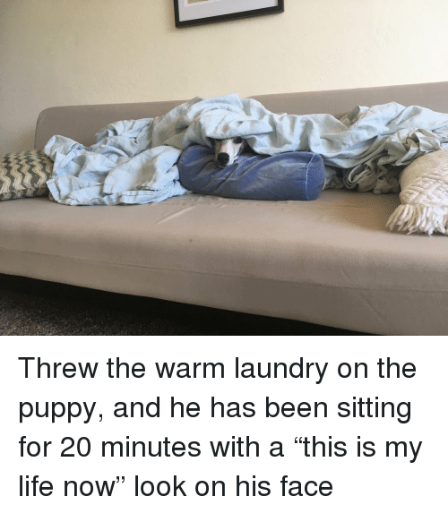 """Laundry, Life, and Puppy: Threw the warm laundry on the puppy, and he has been sitting for 20 minutes with a """"this is my life now"""" look on his face"""