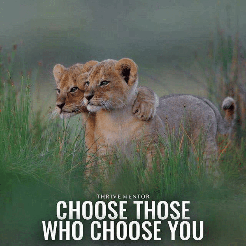 thrive: THRIVE MENTOR  CHOOSE THOSE  WHO CHOOSE YOU