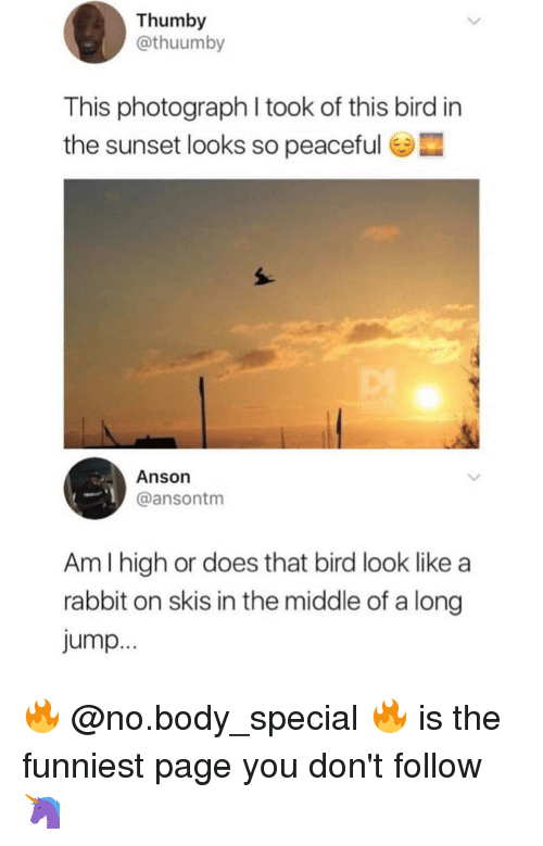 skis: Thumby  @thuumby  This photograph I took of this bird in  the sunset looks so peaceful e  Anson  @ansontm  Am I high or does that bird look like a  rabbit on skis in the middle of a long  Jump 🔥 @no.body_special 🔥 is the funniest page you don't follow 🦄