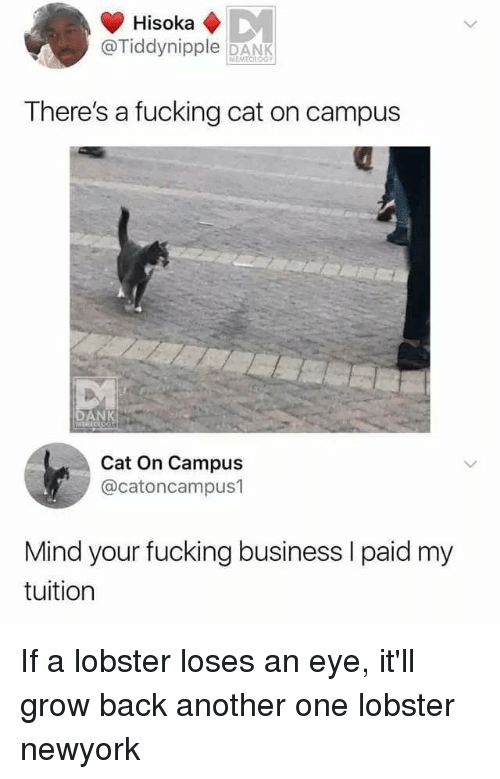 newyork: @Tiddynipple DANK  There's a fucking cat on campus  Cat On Campus  @catoncampus1  Mind your fucking business I paid my  tuition If a lobster loses an eye, it'll grow back another one lobster newyork