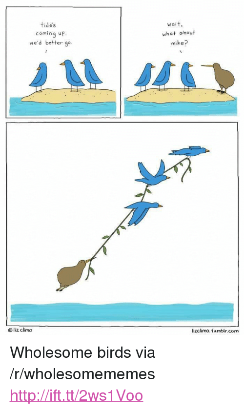 """Lizclimo Tumblr: tides  coming up.  we'd better go  Wai t  what obout  mike?  O liz climdo  lizclimo. tumblr.com <p>Wholesome birds via /r/wholesomememes <a href=""""http://ift.tt/2ws1Voo"""">http://ift.tt/2ws1Voo</a></p>"""